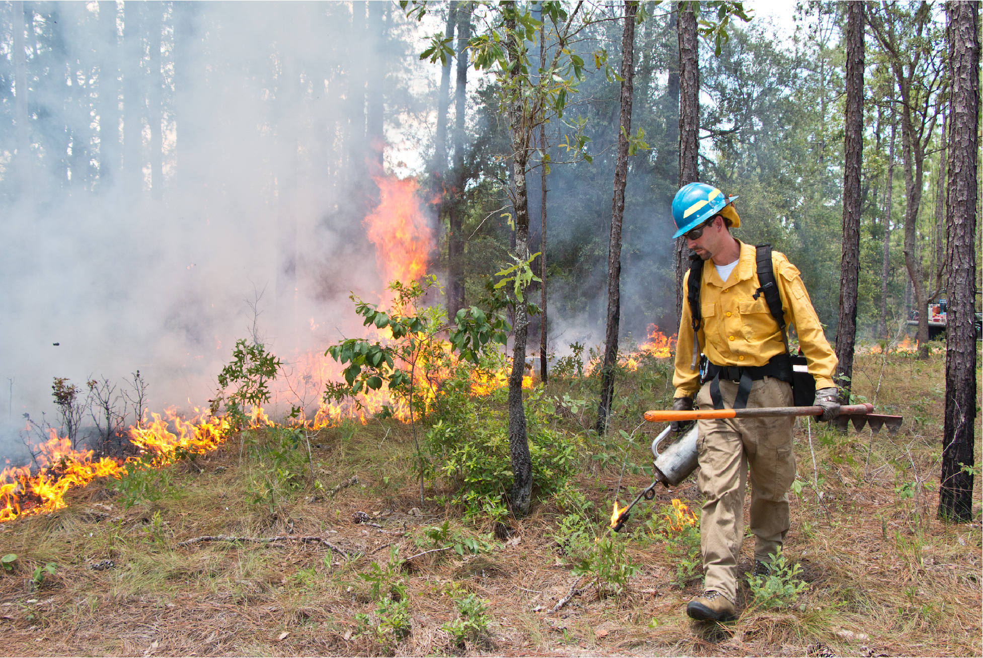 Control burn specialist burning land.